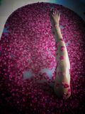 Bare leg of Asian woman exposed above luxury rose petal bath. The bare skin of an Asian lady`s leg, seen in a sensuous posture in a luxury bath full of floating stock images