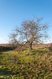 Bare solitairy tree in a nature reserve Stock Photo