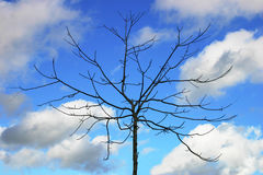 Bare tree. Against blue sky background with some clouds Stock Photos