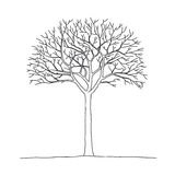 Bare tree. Vector illustration of bare tree Royalty Free Stock Photos