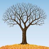 Bare tree royalty free illustration
