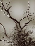 Bare tree. Bare leafless tree Stock Photo