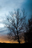 Bare tree. Winter tree silhouette in sunset Royalty Free Stock Photos