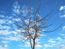 Bare tree against beautiful blue sky with clouds stock image