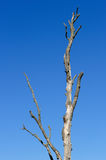 Bare Tree Against Blue Sky Stock Photos