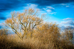 Bare tree against blue sky Royalty Free Stock Photography