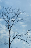 Bare tree against the blue sky Stock Photo