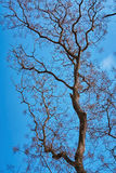 Bare Tree against Sky Stock Image