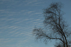 Bare tree against the sky Royalty Free Stock Image