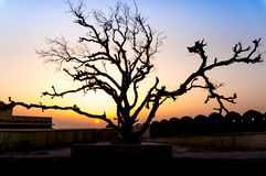 Bare tree against a sunset. Bare leafless tree against a sunset signifying an end or things that are just about to end Stock Photo