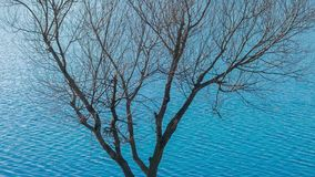 Bare tree on the background of blue lake. Tranquil scenery in nature, bare tree by the lake in springtime stock video