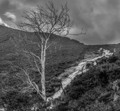 Bare Tree Balck and White. Bare tree in Balck and White in the Wicklow Mountains Stock Photo
