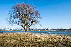 Bare tree on the bank of a river Stock Photography