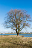 Bare tree on the bank of a river Stock Photo