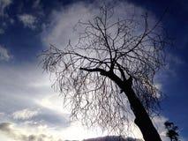 Bare tree. On sky background Stock Image