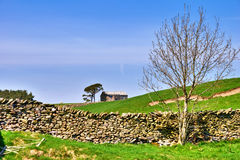 Bare Tree, Barn, And Dry Stone Wall. Stock Images