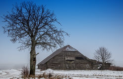 Bare tree and barn. Dusk winter stock images