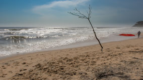 Bare tree on a beach with rough waves Stock Photos