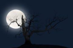 Bare tree with big bright moon Royalty Free Stock Photos