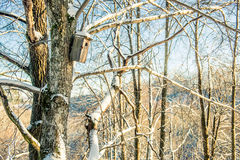 Bare tree and bird box at winter Royalty Free Stock Photo