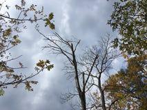 Bare tree, blue-gray cloudy sky. Trees, nature. Bare tree, blue-gray cloudy sky. Trees, nature in early autumn, Vladivostok Stock Photos