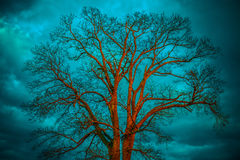 Bare tree, blue sky. Bare tree at sunset orange light, blue dramatic cloudy sky royalty free stock images