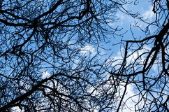 Bare Tree Branch And Blue Sky Stock Photo
