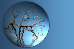 Bare tree branch button Stock Photo