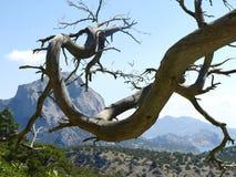 Bare tree branch. Royalty Free Stock Photos