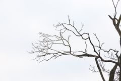 Free Bare Tree Branches Stock Image - 137549351