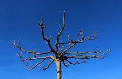 Bare tree and branches against blue sky Stock Images