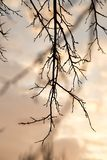 Bare tree branches against the sky at sunset.  Stock Images