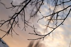 Bare tree branches against the sky at sunset.  Stock Photography