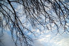 Bare tree branches against the sky at sunset.  Royalty Free Stock Photos