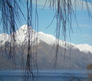 Bare tree branches against snow-covered mountains. The bare branches of a willow frame the view of snow-covered mountains. A blue lake is in the foreground. The Stock Photo