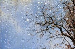 Bare tree branches behind wet glass Stock Photography