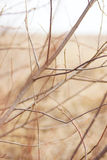 Bare tree branches. Stock Photos