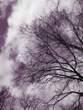 Bare tree branches and clouds Royalty Free Stock Photography