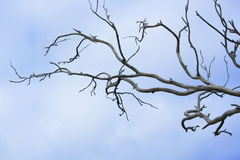 Bare tree branches. The branches of a dead tree reaching across a pale blue sky with light clouds in background Royalty Free Stock Photo