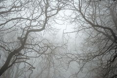 Bare Tree Branches in the Fog. In a haunted forest Royalty Free Stock Photos