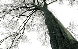 Bare tree branches Royalty Free Stock Images