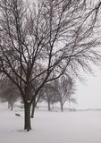 Bare tree with branches like fractals, in a park with cold winter snow weather stock photography
