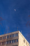Bare Tree branches over blue sky and fasade building. Royalty Free Stock Images
