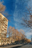 Bare Tree branches over blue sky and fasade building. Royalty Free Stock Photography