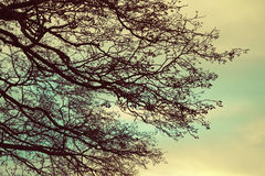 Bare tree branches over cloudy sky background Royalty Free Stock Photography
