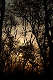 Bare tree branches Stock Photography