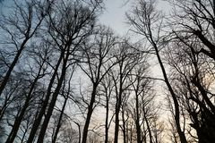 Bare tree branches Stock Images
