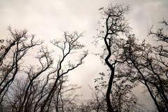 Bare tree branches Stock Photo