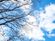 Bare tree branches under blue sky with clouds. Bottom view of bare tree branches under blue sky with white clouds royalty free stock photography