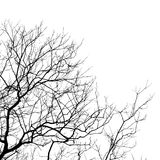 Bare tree branches. On a white background Royalty Free Stock Image